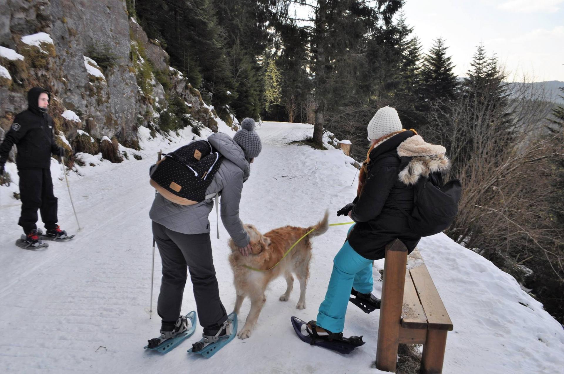 Raquettes dans les Vosges